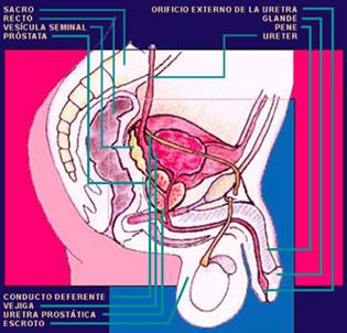 uroandrologia malaga vejiga
